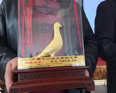 2017包头爱亚卡普双关鸽王冠军