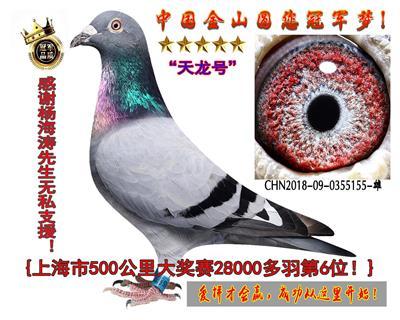 上海市28000多羽500公里6位!