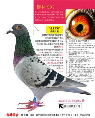 御林992【展售】