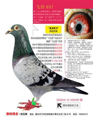 飞回897【【展售】