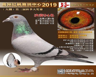 贵州神奇小鸟