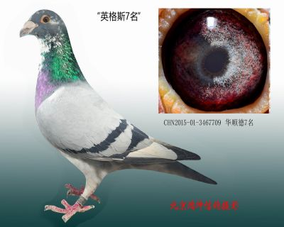 CHN2015-01-3467709 华顺德7名