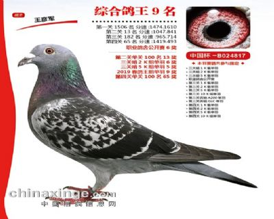 2019年开创者天津春棚综合第9名