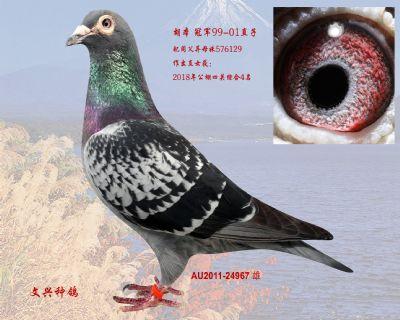 AU2011-24967 雄