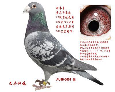 AU99-YAR-0001 雄