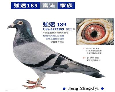 台湾强速鸽舍