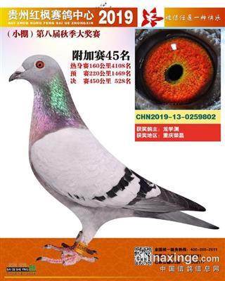 郭氏天马802