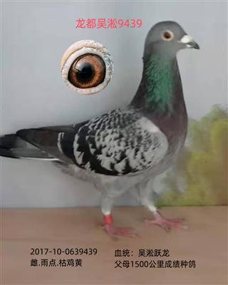 龙都吴淞9439