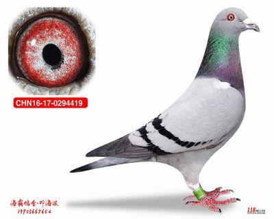 CHN16-17-0294419
