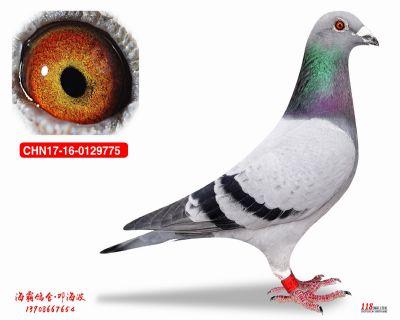 CHN17-16-0129775