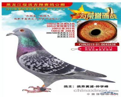 黑龙江吉祥赛鸽俱乐部
