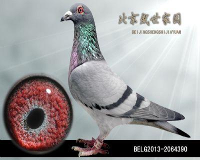 BELG2013-2064390
