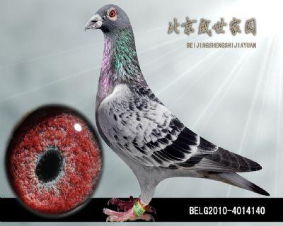 BELG2010-4014140