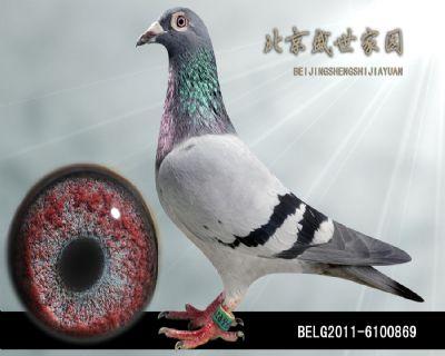 BELG2011-6100869