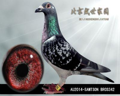 AU2014-SAMTSON-BROS342