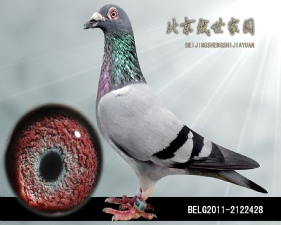 BELG2011-2122428
