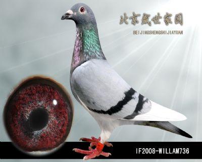 IF2008-WILLAM736