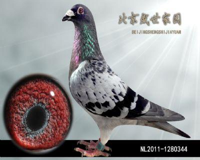 NL2011-1280344