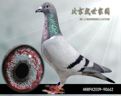 HKRPA2009-90662