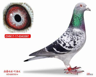 CHN17-17-0343397