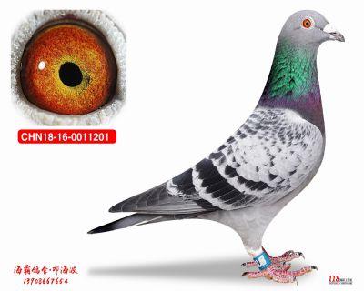 CHN18-16-0011201