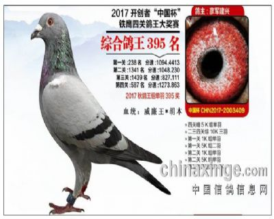2017年北京开创者综合395名