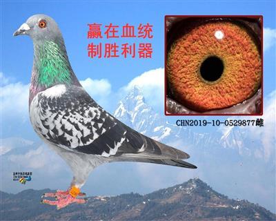 南京市会2000公里第七名直女(转让)
