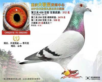 重庆大联盟决赛312