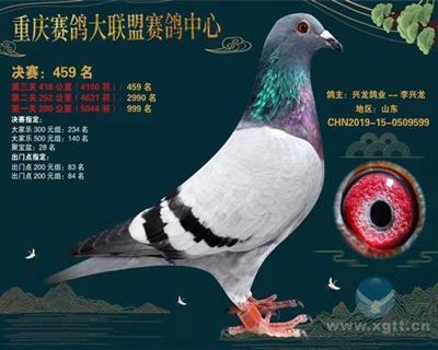 重庆大联盟459名