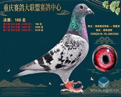重庆大联盟秋棚168名