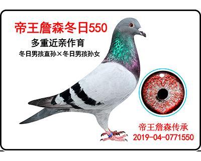 帝王詹森冬日550