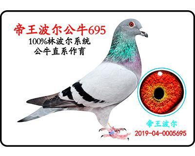 帝王波��公牛695