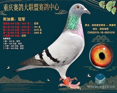 重庆大联盟公棚附加赛冠军