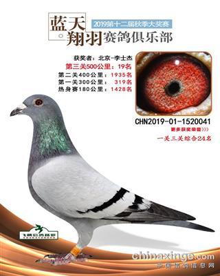 2019年内蒙蓝天翔羽公棚决赛19名