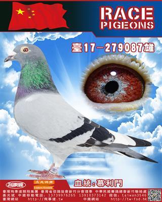 纯血慕利门087