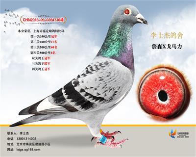 上海嘉定特比环冠军
