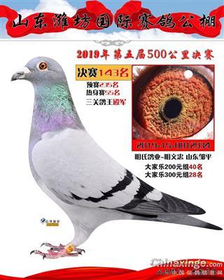 2019年山东潍坊赛鸽公棚三关鸽王4名