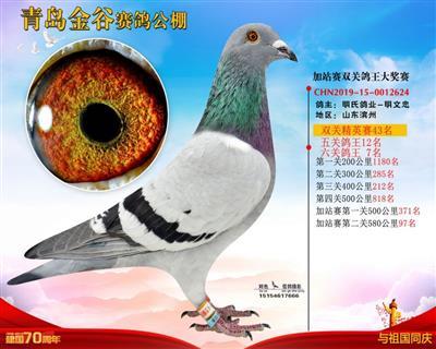 2019年山东青岛金谷公棚6关鸽王7位。