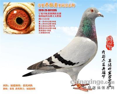宁夏开拓者赛鸽俱乐部121名(已售)
