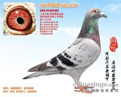 宁夏开拓者赛鸽俱乐部123名(已售)