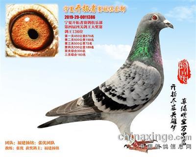 宁夏开拓者赛鸽俱乐部136名(已售)