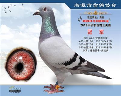 湘潭市信鸽协会幼鸽三关赛总冠军