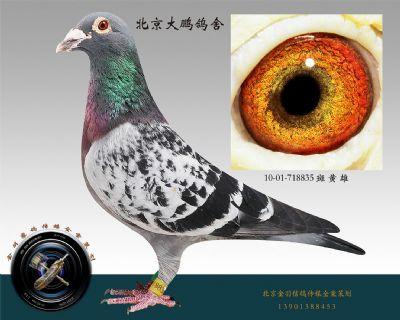 10-01-718835 斑 黄 雄