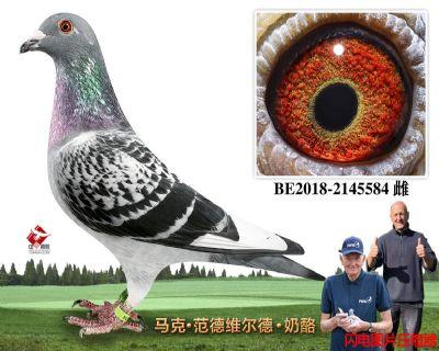 65-BE2018-2145584