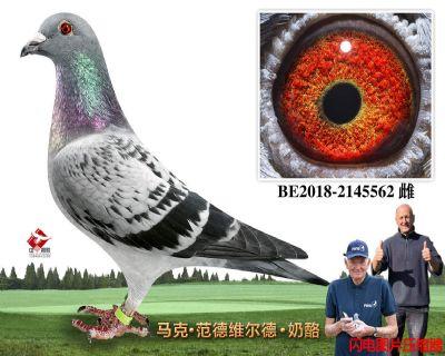 69-BE2018-2145562