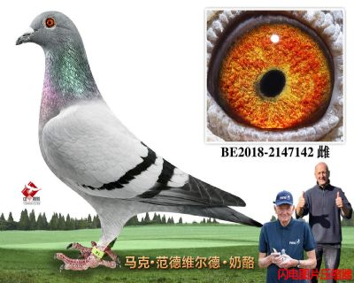 71-BE2018-2147142
