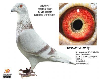 DV17-332-01777 雄
