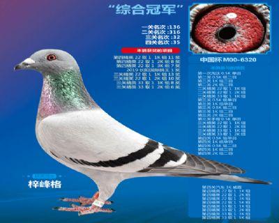 长阳中国杯综合冠军