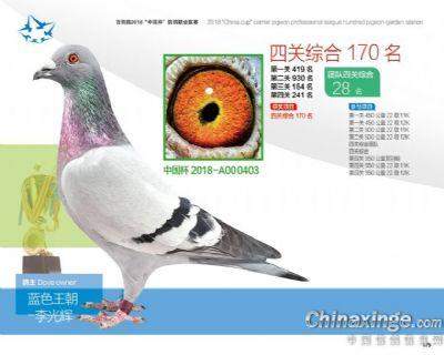 杨欧瓦克403
