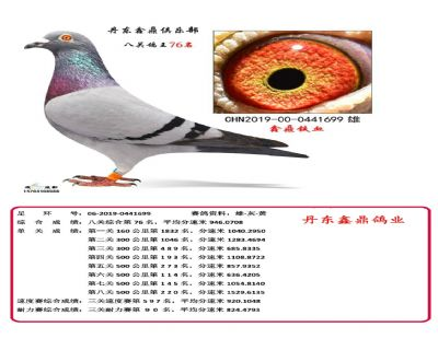 八关鑫鼎铁血76
